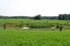 Kaczki - zbiorówka 2012